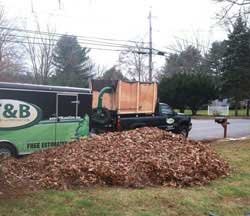 Andover Leaf Pickup