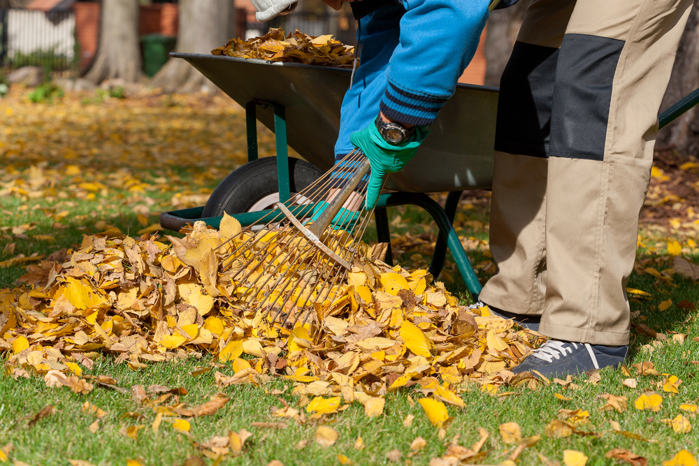 Fall landscaping ideas for this weekend for Fall yard clean up checklist