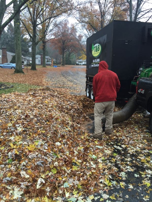 Andover Leaf Removal