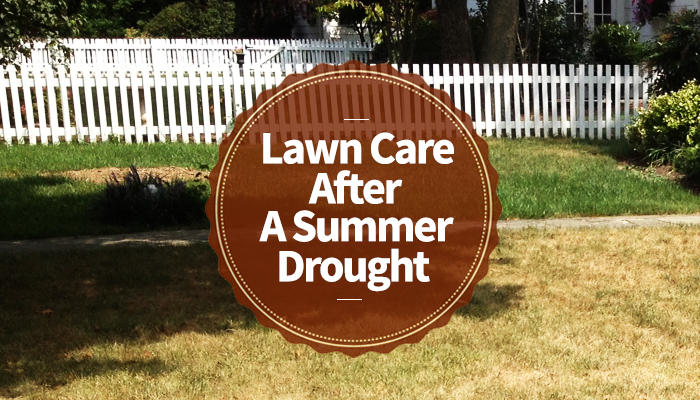 Lawn Care After a Summer Drought
