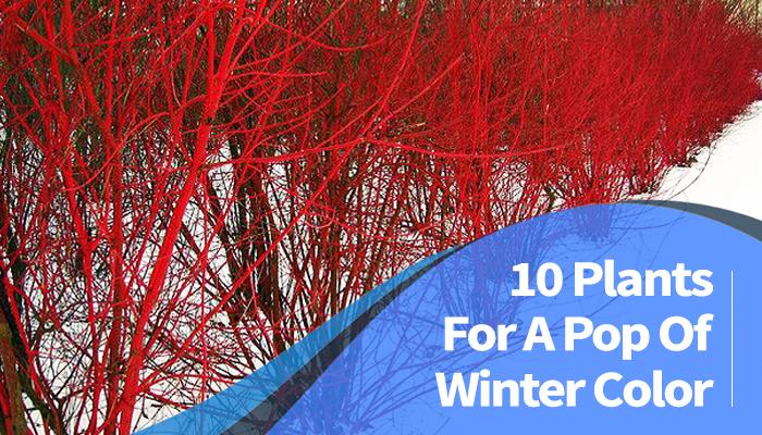 Winds Of Winter Release Date >> A Picture Of Winter - impremedia.net