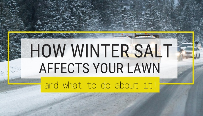 How Winter Salt Affects Your Lawn and What to Do About It