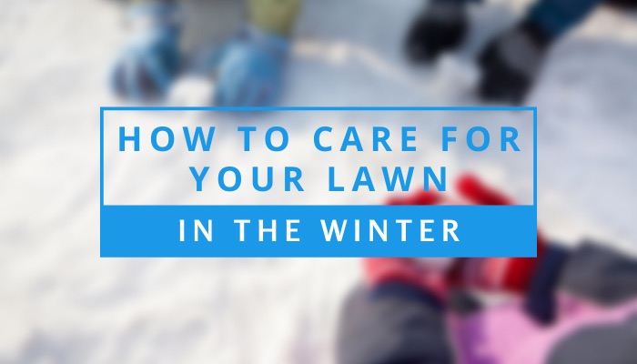 How to Care for Your Lawn in the Winter