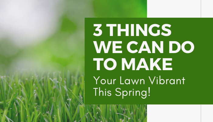 3 Things We Can Do to Make Your Lawn Vibrant This Spring