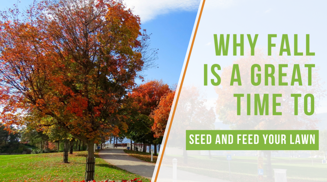 Why Fall Is A Great Time to Seed and Feed Your Lawn