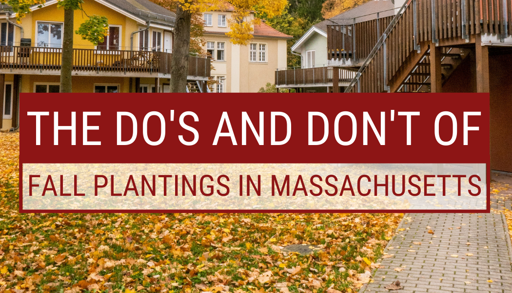 The Do's And Don't Of Fall Plantings In Massachusetts