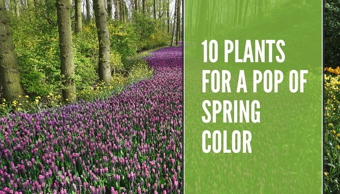 Plants For A Pop Of Spring Color